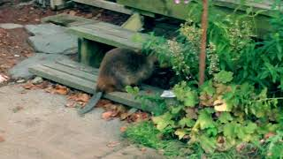 Funny Beaver Suzanne B. Stryker Cute Cat Power Animals