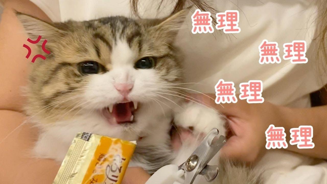 【おしゃべり】爪切りが嫌すぎて、ムリムリと連呼する猫!