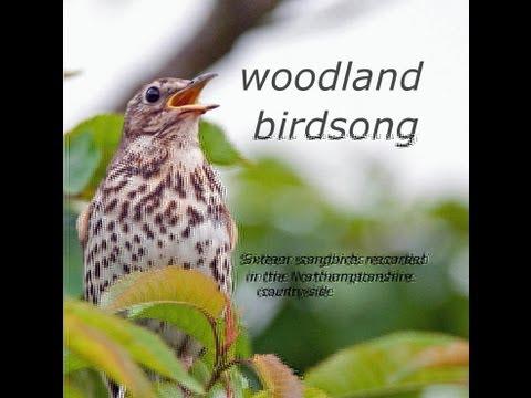 Woodland Birdsong: Sixteen Glorious Songbirds