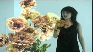 奥田美和子 - 夢