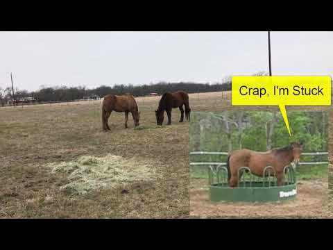 How Do You Know How Much To Feed A Horse - Hay Bags & Round Bales