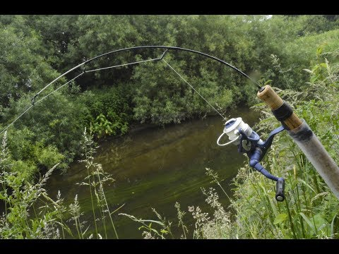 Catching BIG FISH On A Tiny Rod