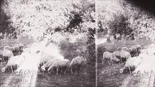 "Godspeed You! Black Emperor - Behemoth (""Asunder, Sweet, and Other Distress"") - 25 minute edit"