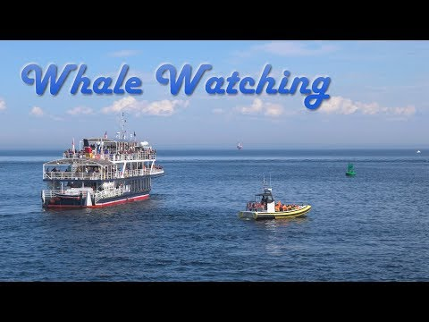 Whale Watching - Baleine - Tadoussac - Riviere-du-Loup - Quebec - Canada