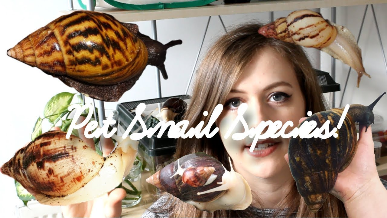 Species Of Giant African Land Snails Youtube