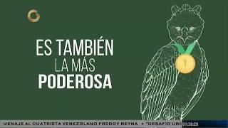 Río Verde: El Águila arpía  | Parte 1