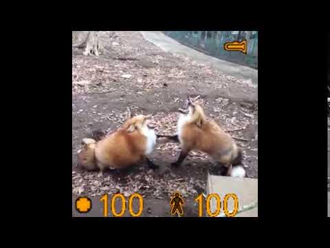 Half-Fox