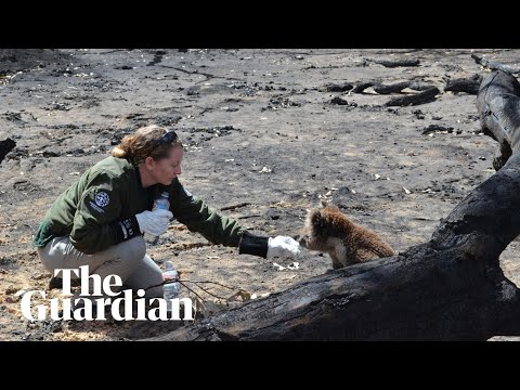 Wildlife Rescue Teams Search For Survivors On Kangaroo Island