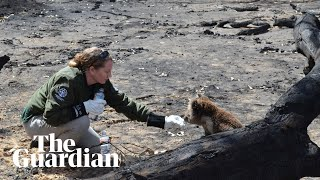 Wildlife rescue teams search for survivors on Kangaroo Island