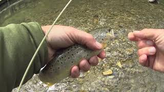 Fly Fishing Slovakia Fishing a small mountain river for trout and grayling Part 2