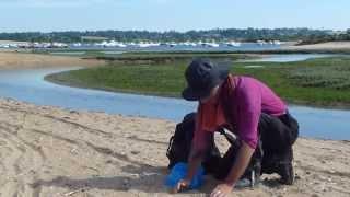 Prélèvement du sable N°1061 / Estuaire de l'Orne