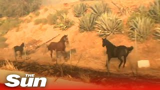 Heroic horse charges towards fire to rescue his family in California