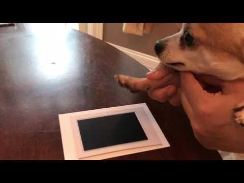 HOW TO MAKE A PAW PRINT PHOTO KEEPSAKE OF YOUR DOG