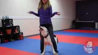 Чудеса тренировки, танцуют девушка и собака