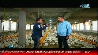 الجدعان | شاهد علي تجربة المهندس محمد قابل في تربية الدواجن بالمزارع الصحراوية