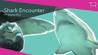 Shark Encounter At Blue Planet Aquarium