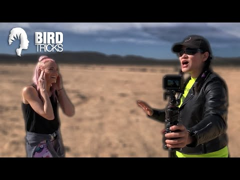 Why I Chose to Help Another Bird YouTuber When Everyone Told Me NOT TO