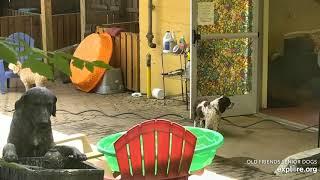 OFSDS  Mack, Babs & Mason.  Mason (Dog) Follows Mason! 😄  Roxy!