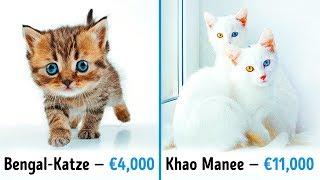 19 fantastische Katzen, die ein Vermögen wert sind