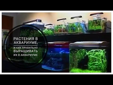 Как правильно выращивать растения в аквариуме