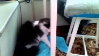 у кота должно быть собственное полотенце