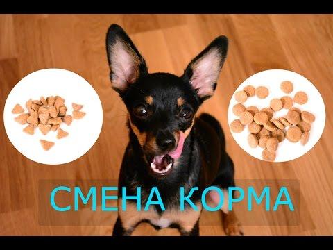 Как приучить щенка к новому корму