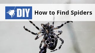 How to find Spiders