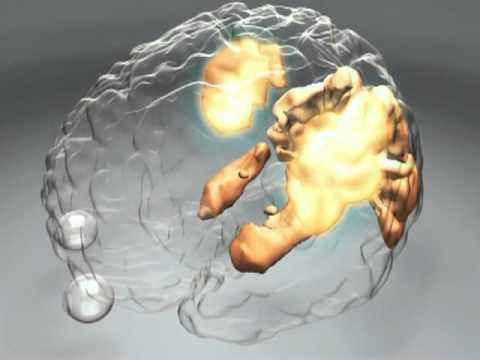 How Does the Brain Work? - Human Cognition | PSYCHOLOGY & BRAIN SCIENCE VIDEO