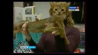 Экзотические кошки живут в Саратове