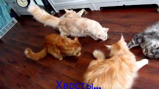 Tails: CatsReal #89