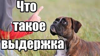 Выдержка при дрессировке собаки. Как обучить собаку выдержке. Как правильно дрессировать.
