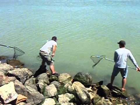 2012 7 28 allan pera lands a benicia salmon youtube for Benicia fishing report