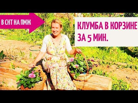 Вопрос: Как использовать ажурные травы в цветнике?