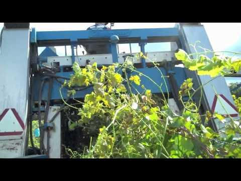 Premier Wines | Hunt Country Vineyards harvest machine ride