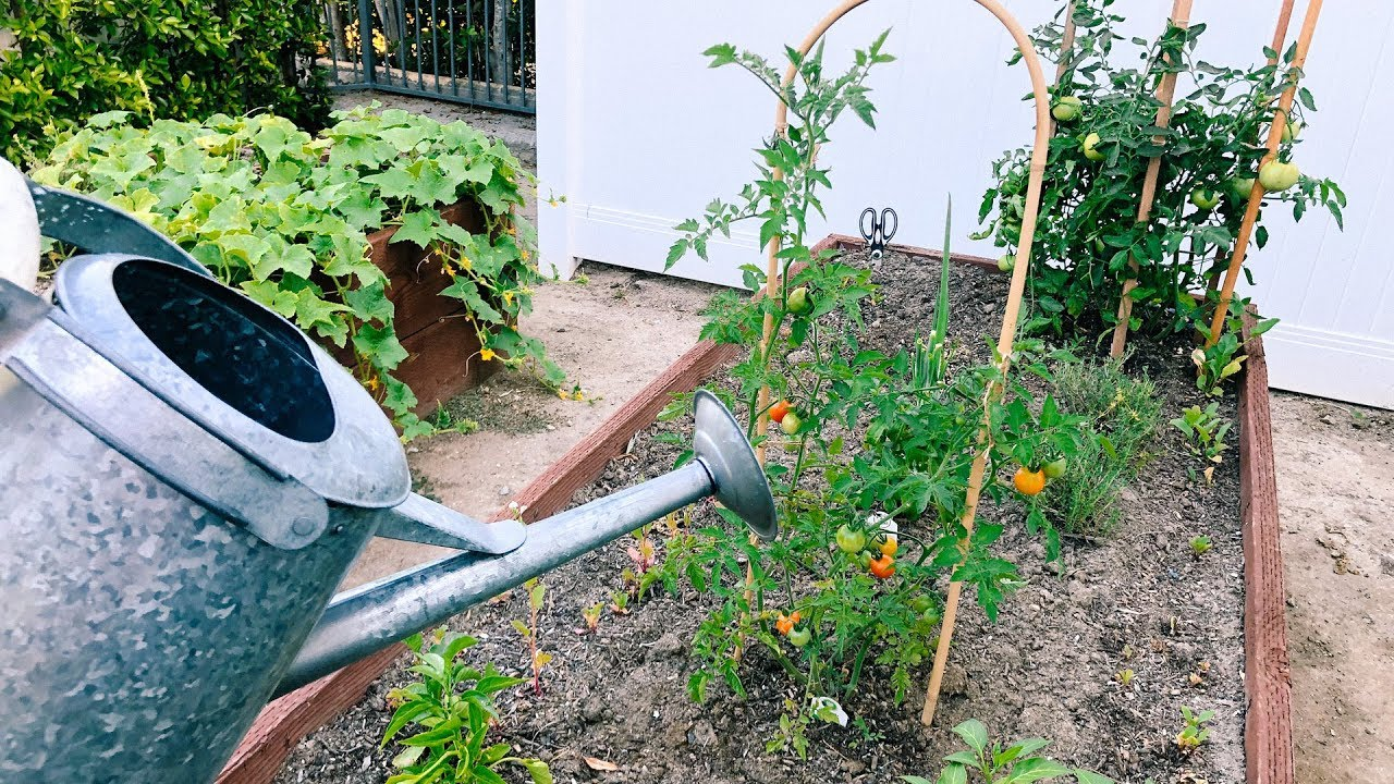 MY HOME GARDEN TOUR | DESI PERKINS