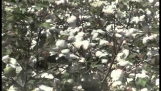 Okatibbee Creek video trailer