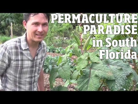 Permaculture Paradise in South Florida Grows Food and Community