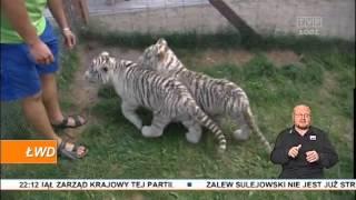 Jak zwierzęta radzą sobie z upałami?