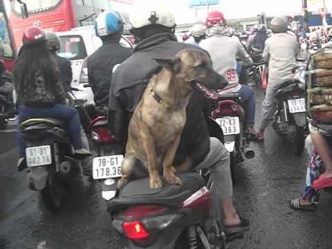 Chó Ngồi Xe