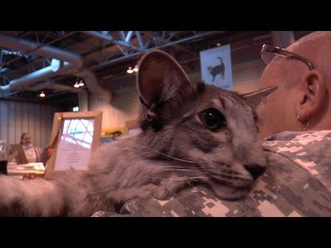 Supreme Cat Show 2014