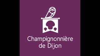 Champignonniere de Dijon
