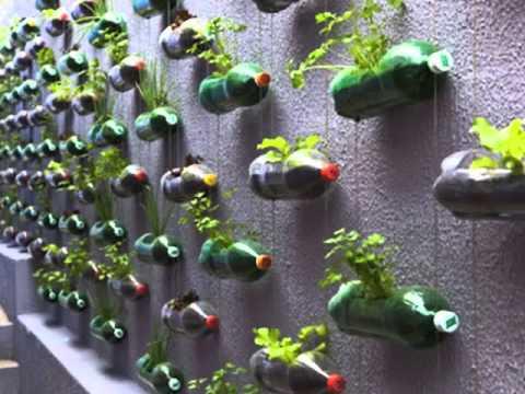 Ideas para cuidar la naturaleza youtube - Como cuidar las hortensias de exterior ...