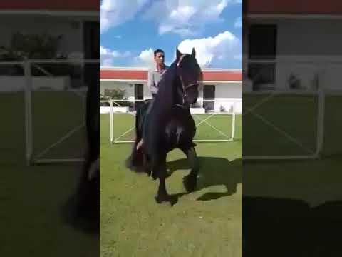 I Love Horses   Such a beautiful horse! Credit to Eduardo Flores