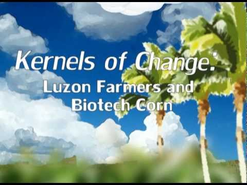 Kernels of Change: Luzon Farmers and Biotech Corn