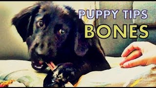 Puppy Tips- Resource Training (bones, Kongs, Toys)
