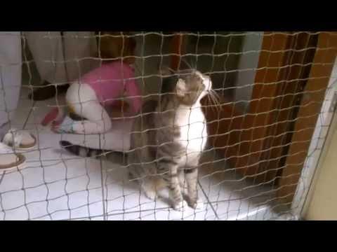 Katzennetz im Test. Türsicherung vom Katzennetz-Profi
