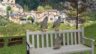 田舎でよく聞く鳥の鳴き声をEDMにしました(ハトの鳴き声)(キジバト) thumbnail