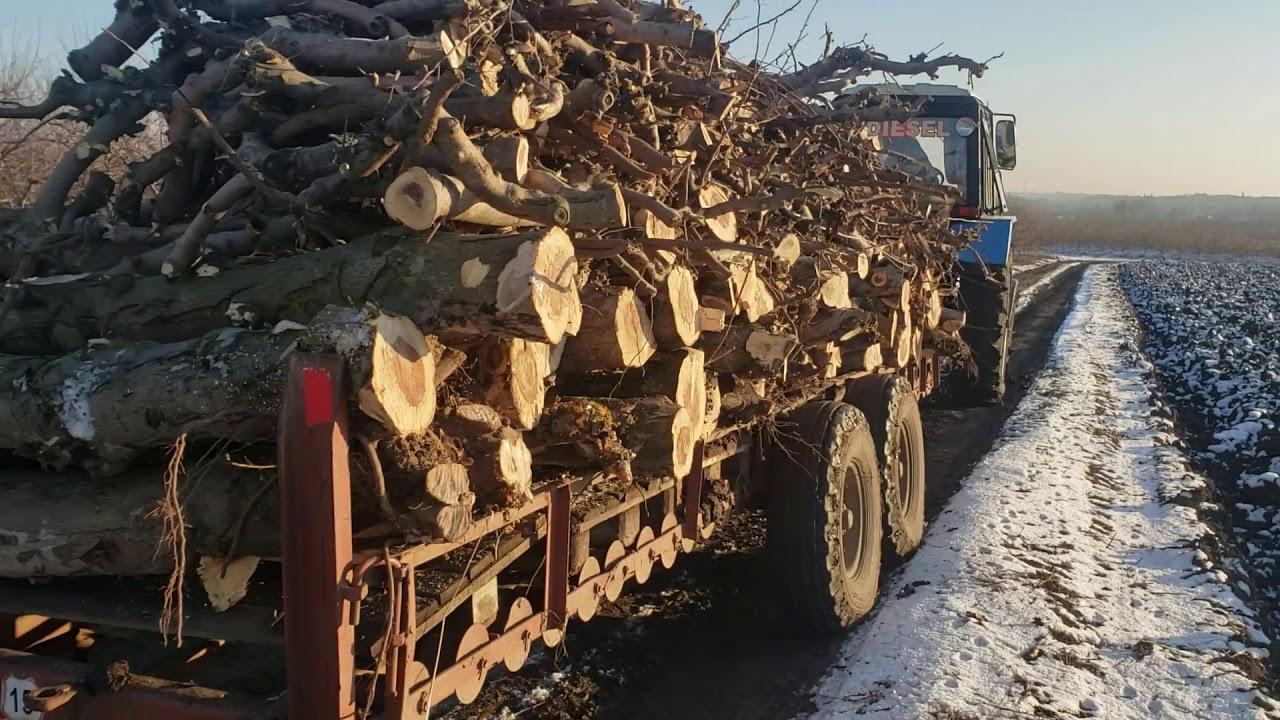 Вывозка дров по первому снегу с трактором мтз 82.1