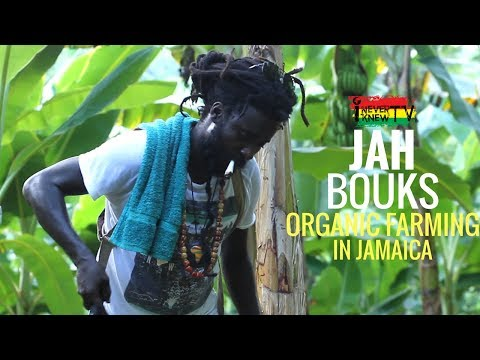 "Jah Bouks Interview ""Organic Farming in St. Thomas, Jamaica"""