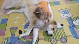 Алабай в доме - дети счастливы. Собака гигант | ПРИРОДА ТВ